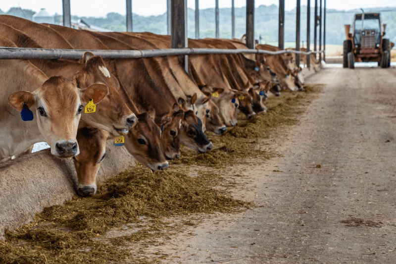 bandos valdymas, fermu statyba, pieno ukis, agroinfo