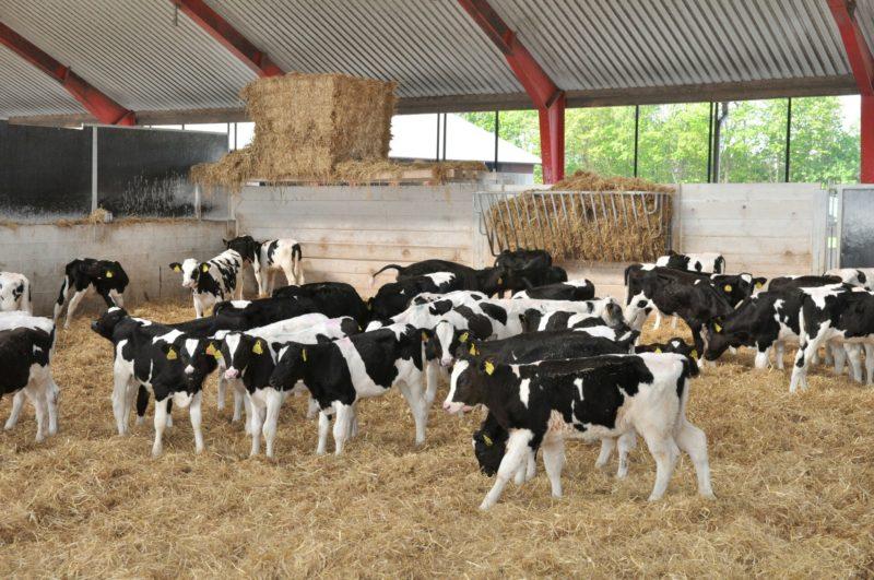 verseliai, fermu statyba, agroinfo, pieno ukis